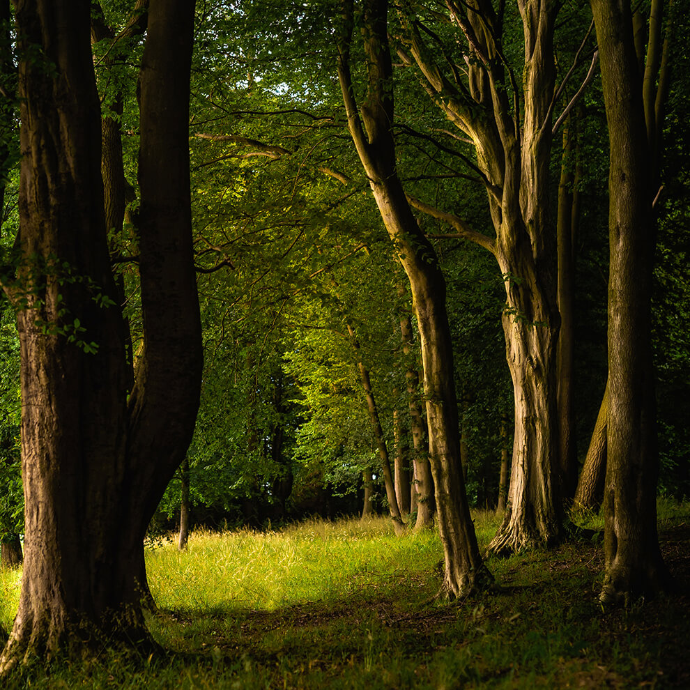 The ancient woodland at Combermere Abbey is the perfect place to enjoy wildlife and beautiful walks