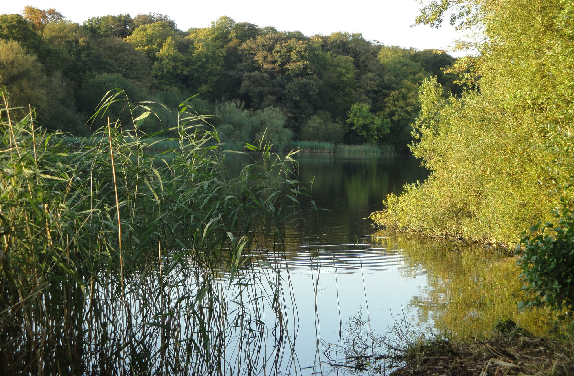 The breathtaking lake at Combermere Abbey is surrounded by ancient woodland