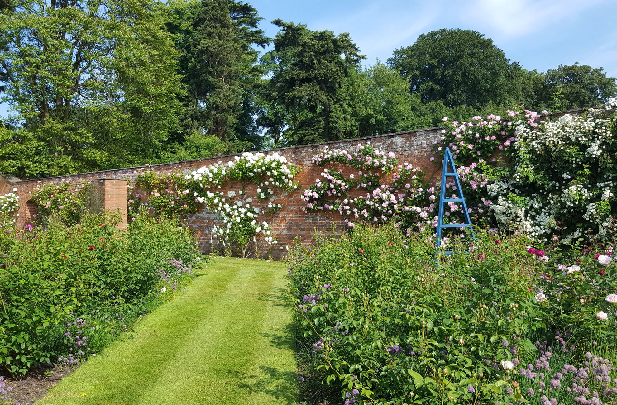 The Walled Gardens at Combermere Abbey look spectacular In the summer sunshine