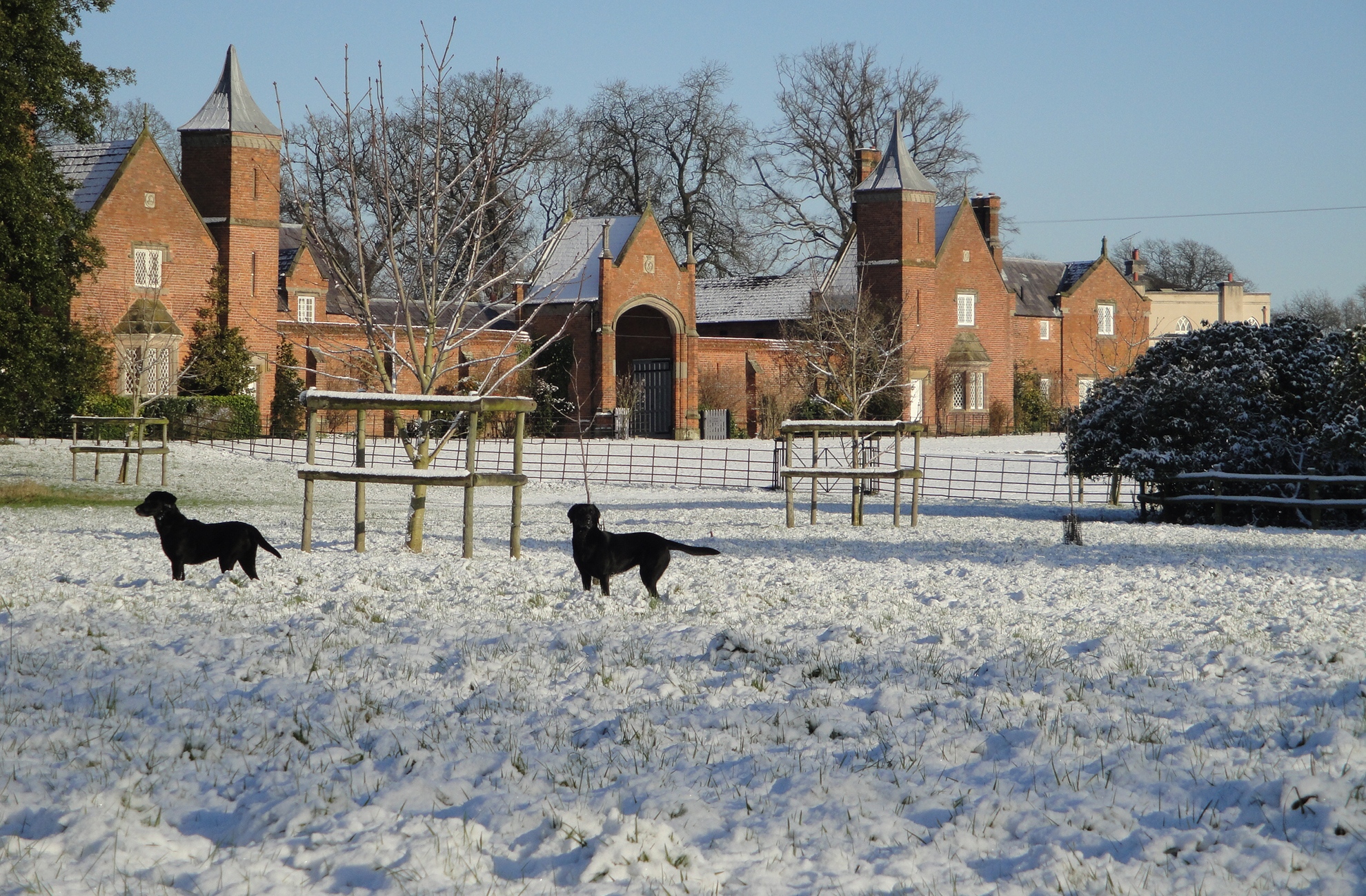Dogs play in the snow outside the cottages at Combermere Abbey