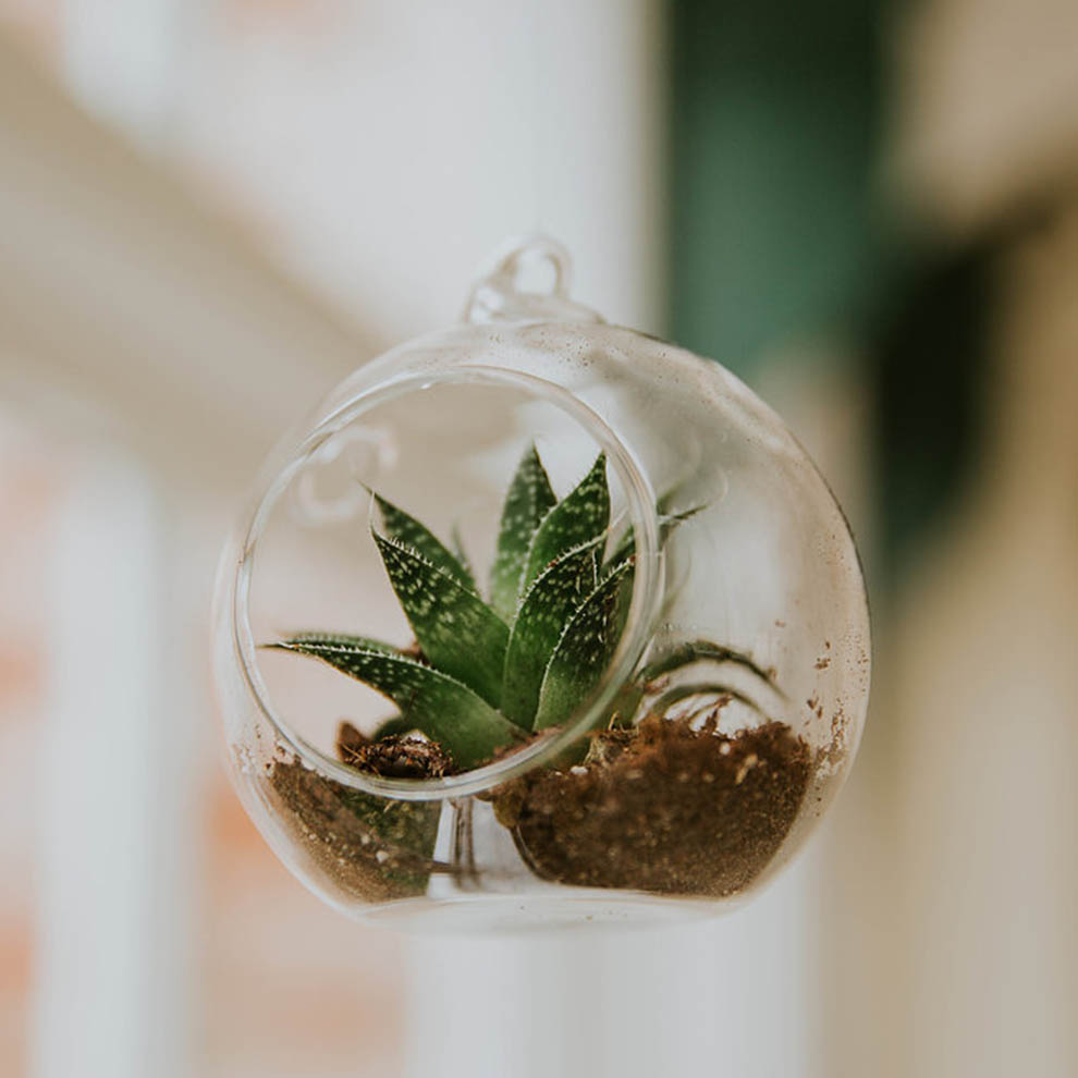 As an alternative wedding décor idea succulents were placed around the Glasshouse at Combermere Abbey
