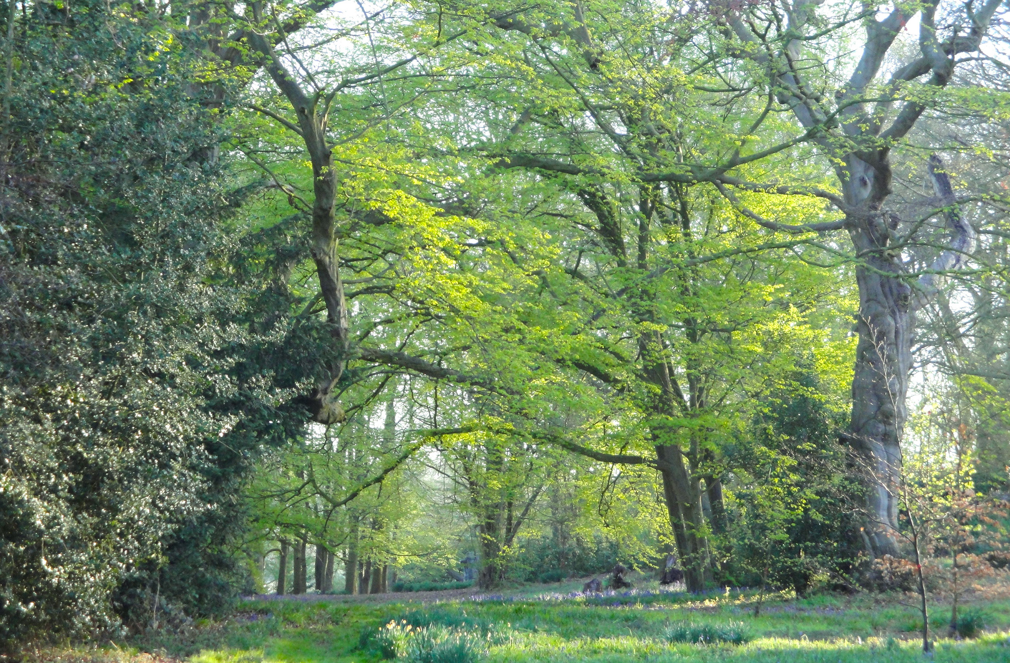 Woodland walks at combermere abbey-cheshire