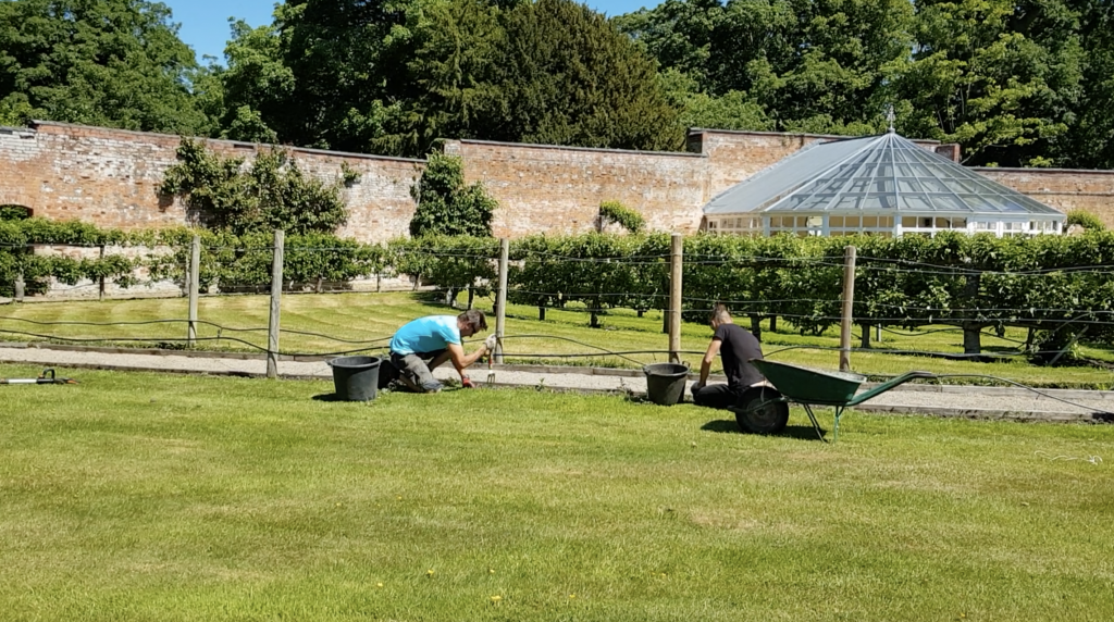 Tending to the fruit tree maze at Combermere Abbey