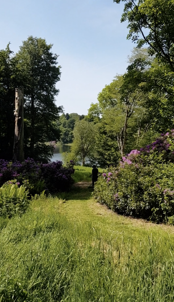 Woodland tending at Combermere Abbey